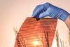 Saule Technologies perovskite solar cells