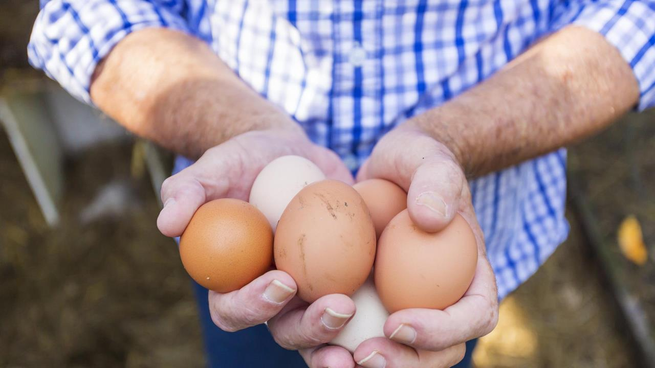 5f6255f7d3a Spectroscopy allows in-egg chicken sexing | Research | Chemistry World