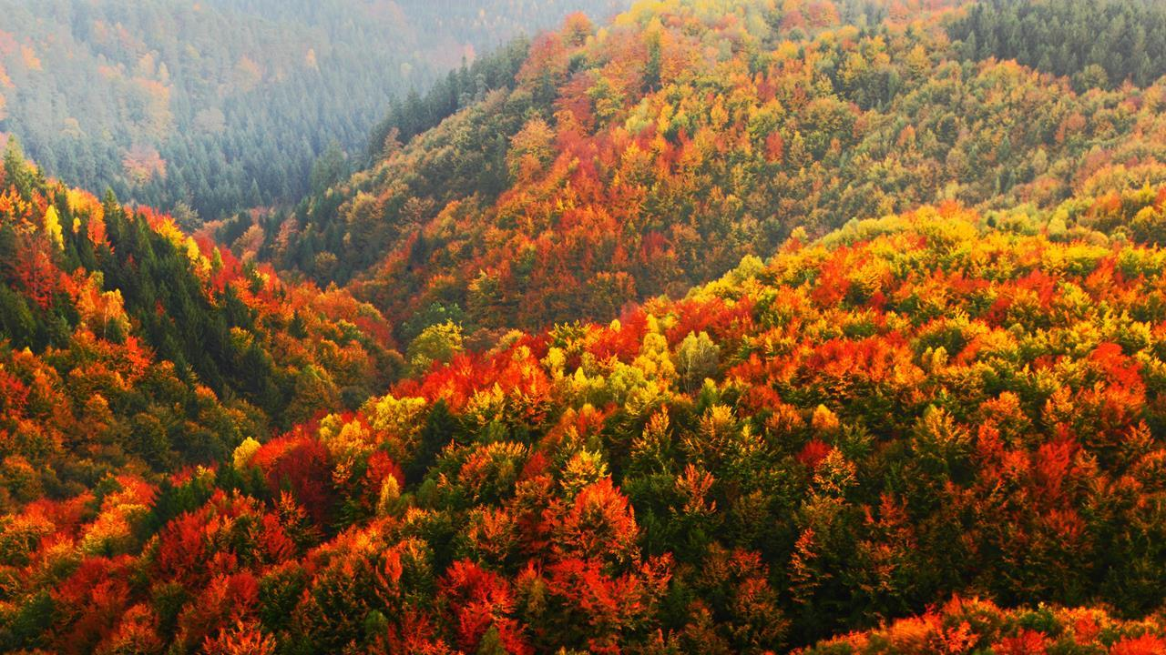 https://d1w9csuen3k837.cloudfront.net/Pictures/1280x720/6/3/3/108633_autumn_forest.jpg