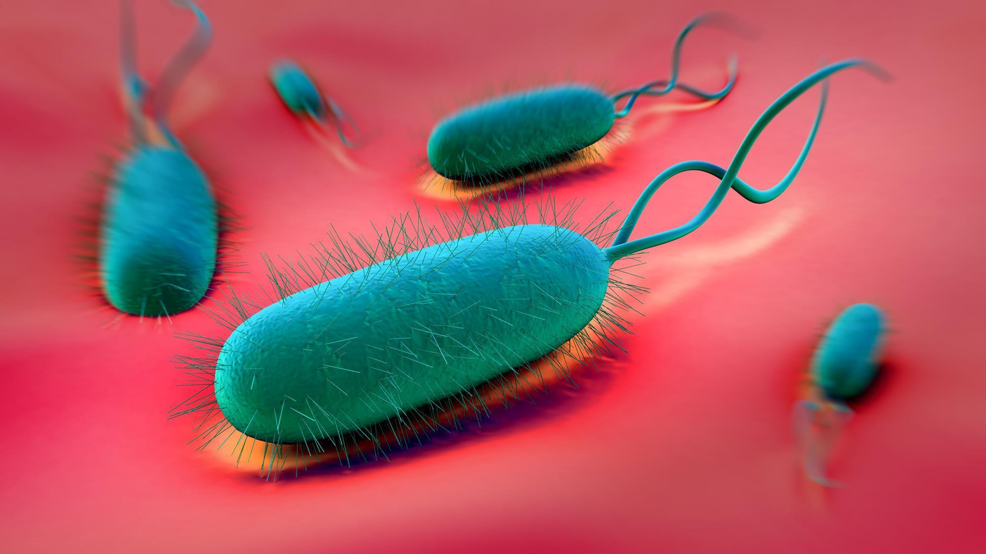 Bismuth drugs kill bacteria by disrupting metabolism