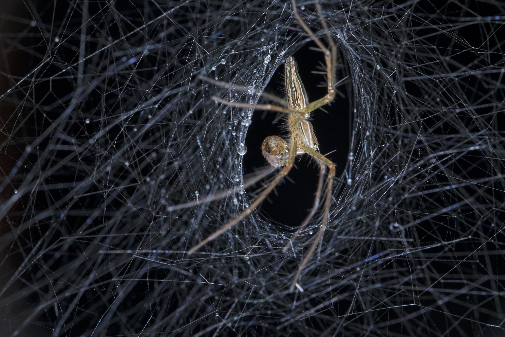 the latest 2afd3 9d262 Spinning out spider silk research  Feature  Chemistry World
