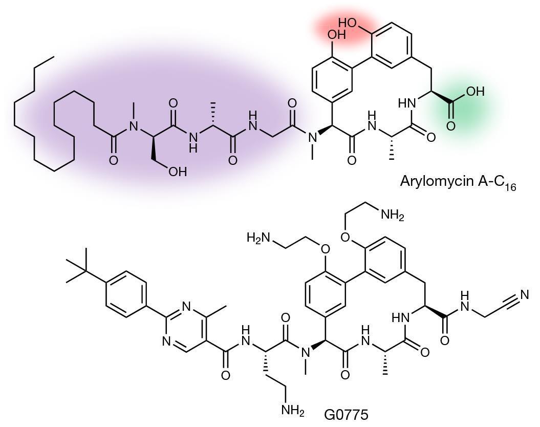 Genentech antibiotic quells resistance | Research