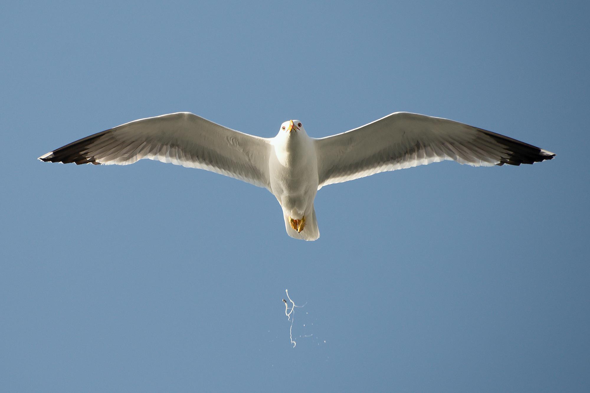 Image result for bird poop