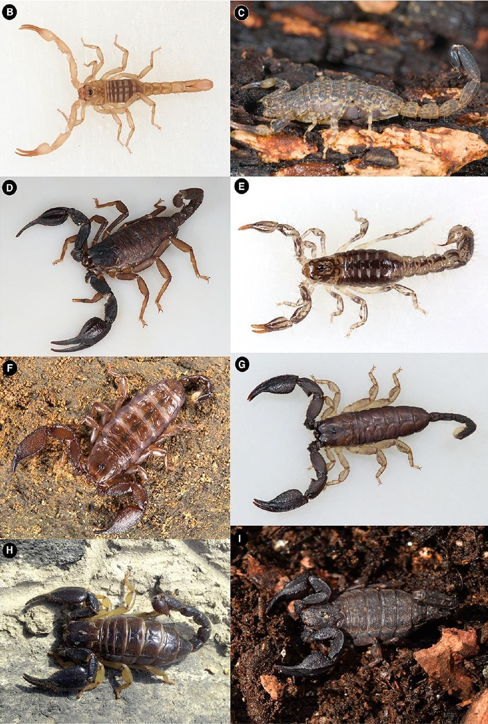 Venom peptides reveal secrets of scorpion evolution