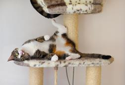 A cat, playing on a purpose built cat tower