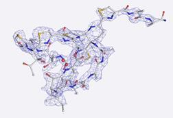 Rapid structure determination using CryoEM and MicroED