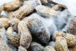 Mouldy peanuts