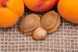 Apricot seeds and almonds