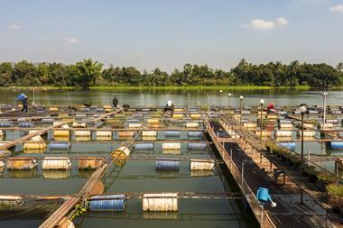 A photograph of a fish farm