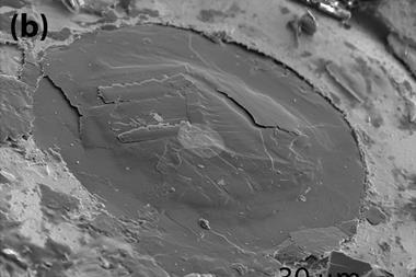 SEM image of the sample after recovery from the cell - Fig1b