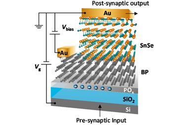 BP−SnSe junction synaptic device