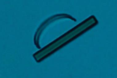 An optical microscopy image of a cis-DMAAM microcrystal