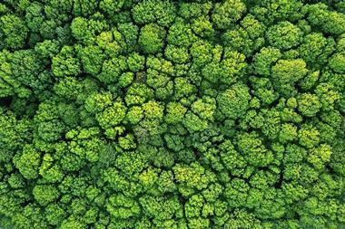 A picture showing an aerial view of a forest