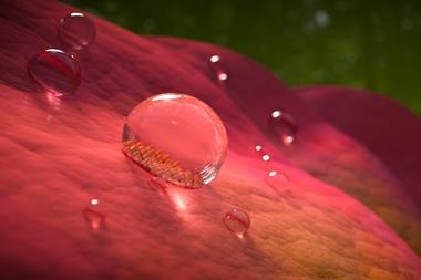 An image showing droplets on a rose petal; the fine surface structure of one of the droplets can be seen