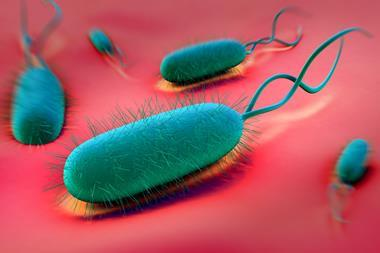 Illustration of helicobacter pylori on red background
