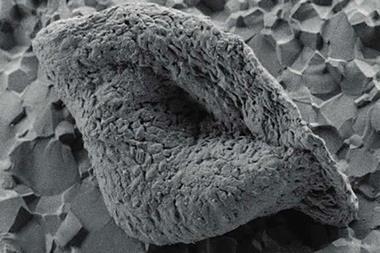 A lenticular microfossil