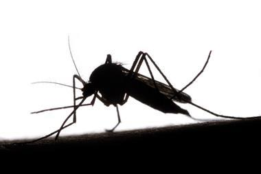 An image showing a mosquito biting