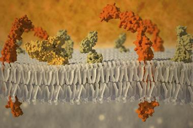 A picture of a cell membrane