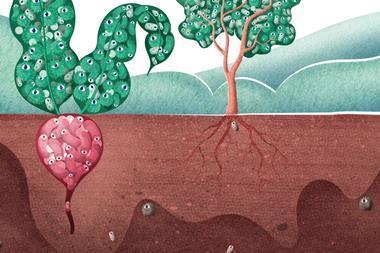 Plants' bacterial zoos