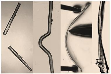 Trimorphs of 4 bromophenyl 4 bromobenzoate. Elastic  brittle  plastic
