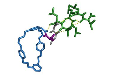 α-Helicity of operation product oligoleucines