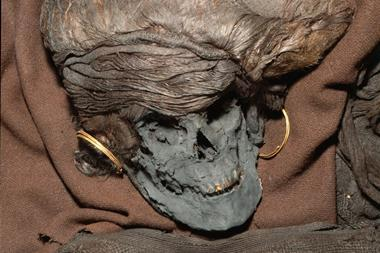 A picture showing the head skeleton remain of the Skrydstrup Woman; her hair is styled in an elaborate coiffure and she is wearing large gold hoop earrings