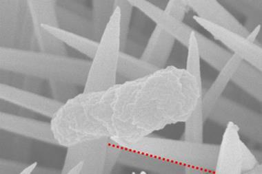 Characterisation of 3D nanoclaws formation - single crystalline