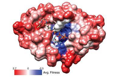 Making thousands of genes in parallel enables multiplexed reporter assays that explore the 'fitness' of different proteins that they encode for. Here, structural variations in the PPAT enzyme that help bacteria grow are coloured red, and ones that hinder
