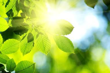 A photograph showing sunshine through green leaves
