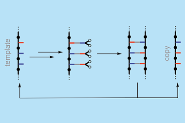 An image showing the sequence information transfer using covalent template-directed synthesis