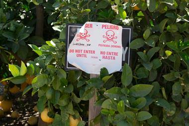 An image showing a sign warning of the application of the pesticide Lorsban (Chlorpyrifos) in a California orange grove