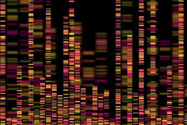 A picture showing the visualization of genomic data