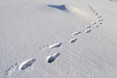 An image of footprints in the snow