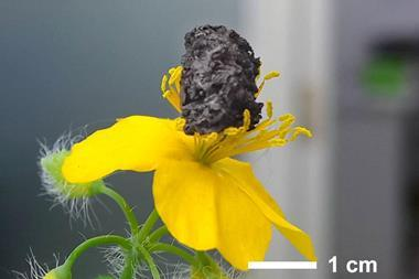 Nanoporous nickel cathodes for lithium oxygen batteries are ultralight, shown here balanced on flower stamens.