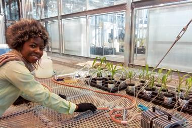 An image showing Eucharia O. Nwaichi at the Greenhouse at StockBridge School of Agriculture UMASS Amherst MA US