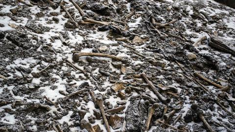 An image showing disarticulated skeletal elements scattered around the Roopkund Lake site