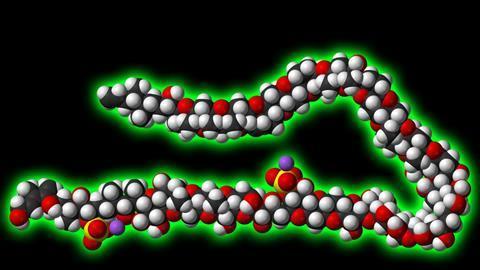 Maitotoxin structure