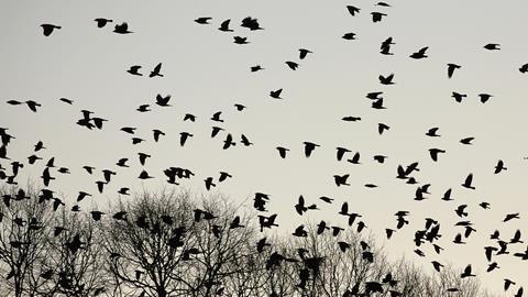 "18/"" CROW LOVER Street Sign death hitchcock bird wings feathers Indoor//Outdoor"