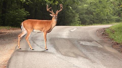 Deer i stock 147018416