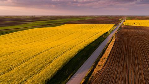 Aerial shot of canola, rape seed from a drone