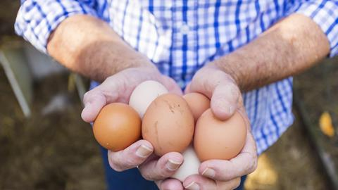 Chicken eggs farmer hands