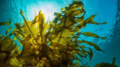 Seaweed under the sea