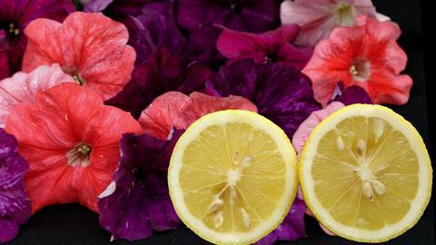A picture showing citrus fruit with petunia flowers