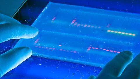 Agarose gel with UV illumination - Ethidium bromide stained DNA glows orange (close-up)
