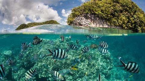 Palau to become first country to ban sunscreens to protect coral reefs