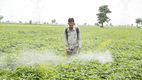 Unidentified Agricultural workers spraying pesticide in soybean fields. An Indian farming scene. Akola,Maharashtra, India