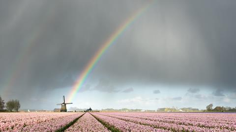 Rainbow over a field of flowers