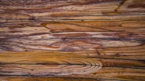 A photograph of a Canadian maple log
