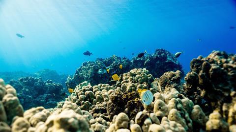 Coastal reef, Hawaii, USA.
