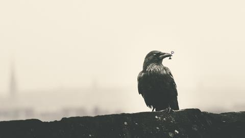 crow with key in its mouth